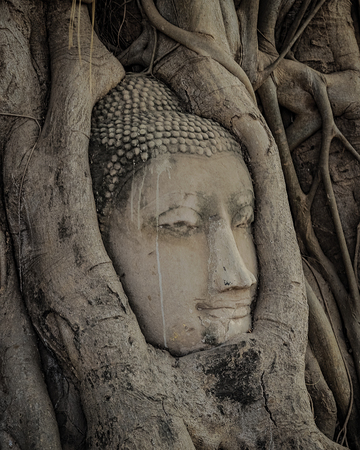 thailand s landmarks: Buddha head statue in the tree roots Stock Photo