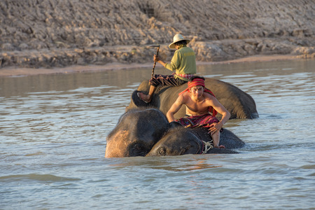 mahouts ride a elephants and prepare to take a bath elephants in river. Editorial