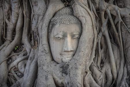 cabeza de buda: Buddha head overgrown with tree roots