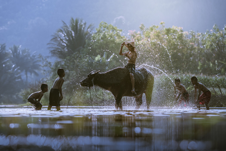 Childrens playing with a buffalo in his field.