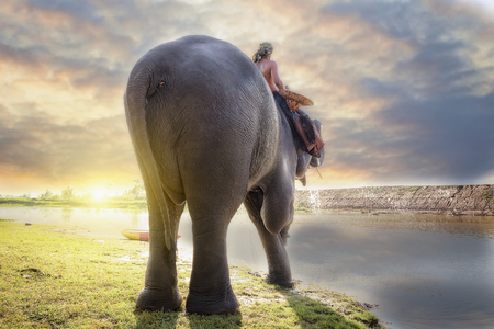 mahout: Elephant and mahout  in village surin thailand ,an elephant is like a family. Stock Photo