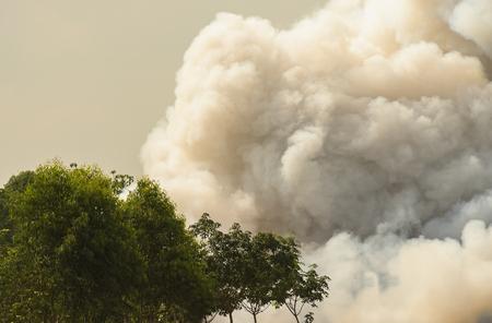 Dense white smoke rising from the raging wildfire,close up swirling white smoke background.