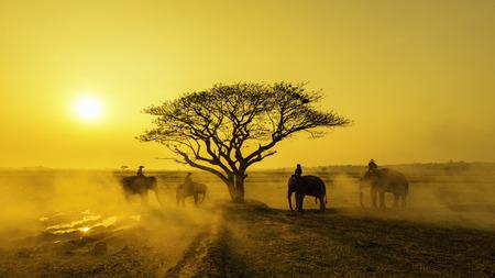 Elefanten und Mahouts , die Elefanten in Safari durchführen Standard-Bild - 90100298