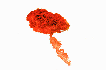 fire flames with sparks on a white background, orange flames isolated on white background