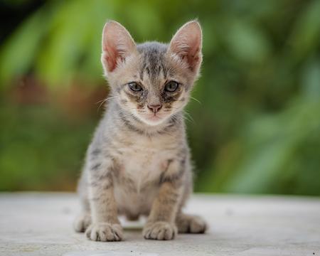 Kitten threaten enemies with shock .