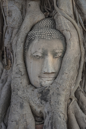 Buddhas head in tree roots