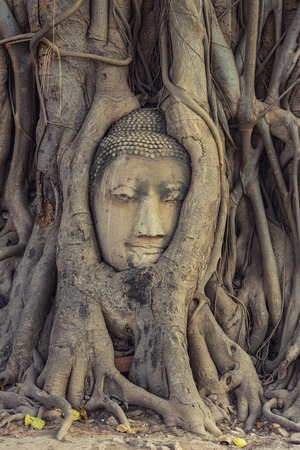 Buddha head in tree roots. Stock Photo