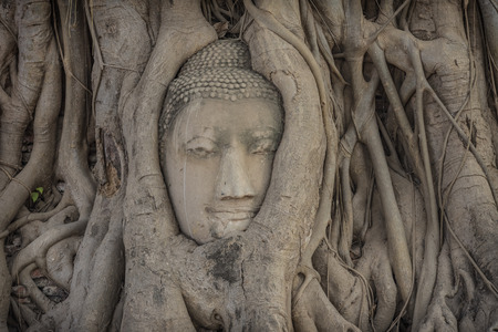 Buddha head overgrown with tree roots