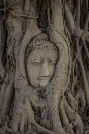 Buddhas head in tree roots. Stock Photo