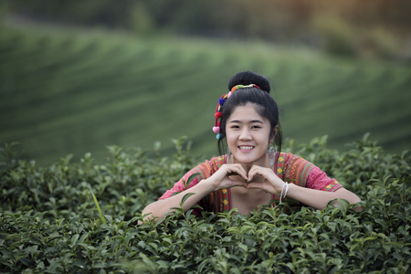 Tribe woman harvesting tea in the farm in rural ,Landscape with green tea fields in Chiang Rai,Thailand