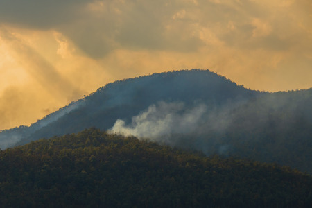 fire,wildfire,burning pine forest in the smoke and flames,Wildfire is burning trees and dry grass in the forest on the mountain.