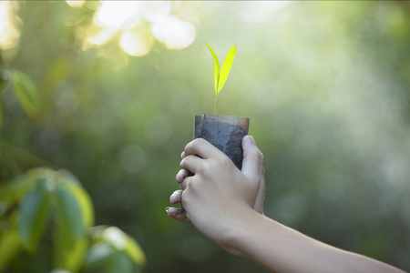 Planting trees.planting forests, seedlings,Growth,Two hands was carrying of potting seedlings to be planted in to the soil,The concept of refreshing nature,plant a tree watering a tree in nature light