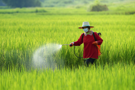 Farmers spraying pesticide in rice field wearing protective clothing,Farmer spraying pesticide to rice by insecticide sprayer with a proper protection in the paddy field. Standard-Bild - 114061938