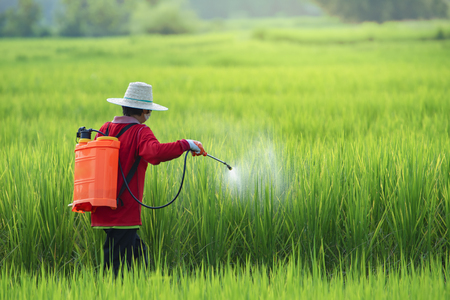 Farmers spraying pesticide in rice field wearing protective clothing,Farmer spraying pesticide to rice by insecticide sprayer with a proper protection in the paddy field. 免版税图像