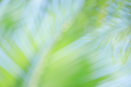 Fresh green tree leaves with frame of natural background.Abstract blur green color for nature background,blurred and defocused effect spring concept for design natural background.
