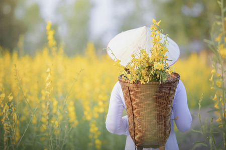Vietnamese girl with yellow flowers.Beautiful Happy Smiling Young Asian Woman Wearing Traditional White Ao Dai Dress(Clothing), Vietnamese Conical Hat Leaf Hat In Flower Garden.