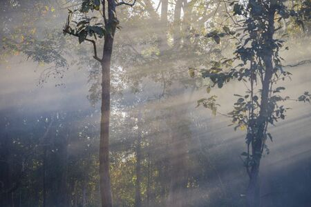 Ray light in the forest with magical autumn forest.