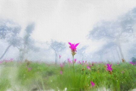 Watercolor paintings of pink Siam Tulip(Krachiew flowers) fields blooming in a large forest covered with thick fog in the morning.