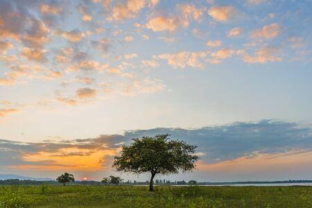 Alone tree on meadow with sunset. Beautiful sunset through with tree, magical sunset with tree. Zdjęcie Seryjne