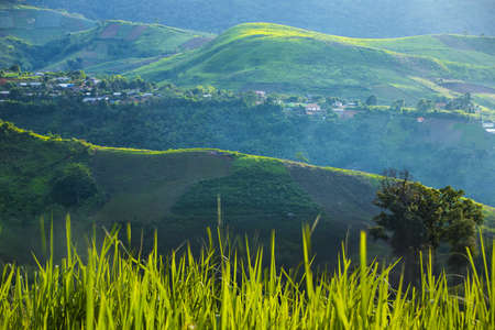 Mountain farming, Most beautiful rice fields in  mountain valley, Beautiful natural landscape in the Mountain with rice fields.Phu Thap Berk, Thailand. Stock Photo