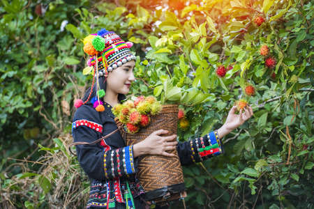 Hilltribe farmers harvest products from rambutan gardens.