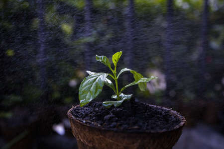 Water spray from watering plants. Stockfoto
