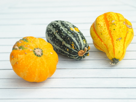 elliptic: Three various decorative pumpkins on a white table. The focus is on the green gourd in the middle of the scene. Stock Photo