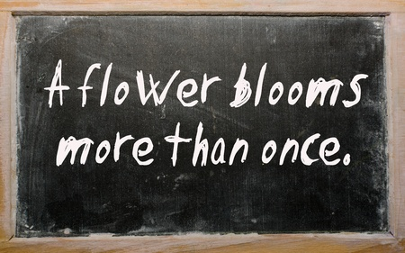 than: Blackboard writings  A flower blooms more than once
