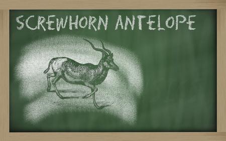 Addax nasomaculatus sketched with chalk on blackboard
