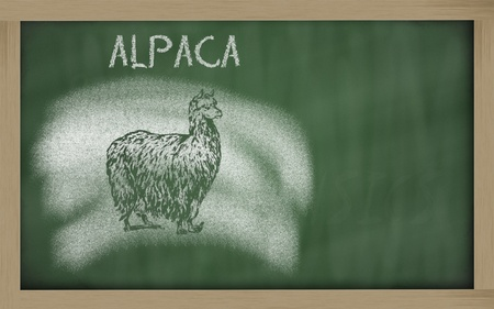 vicugna pacos sketched with chalk on blackboard Stock Photo
