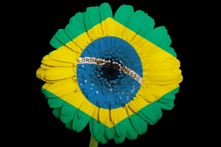 gerbera daisy flower in colorsnational flag of brazilon black background as concept and symbol of love, beauty, innocence, and positive emotions photo