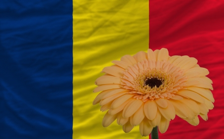 chadian: gerbera daisy flower and national flag of  chad as concept and symbol of love, beauty, innocence, and positive emotions Stock Photo