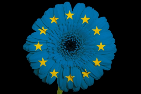 gerbera daisy flower in colorsnational flag of europeon black background as concept and symbol of love, beauty, innocence, and positive emotions photo