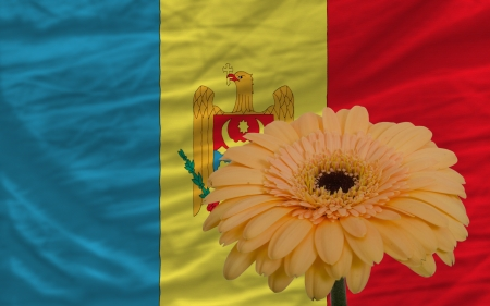gerbera daisy flower and national flag of moldova as concept and symbol of love, beauty, innocence, and positive emotions Stock Photo - 18104514