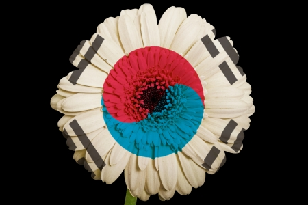 gerbera daisy flower in colors national flag of south korea on black background as concept and symbol of love, beauty, innocence, and positive emotions photo