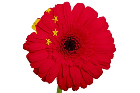 gerbera daisy flower in colors national flag of china on white background as concept and symbol of love, beauty, innocence, and positive emotions photo