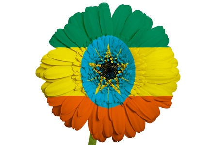 piktogramm: gerbera daisy flower in colors national flag of ethiopia on white background as concept and symbol of love, beauty, innocence, and positive emotions