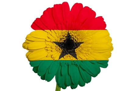 piktogramm: gerbera daisy flower in colors national flag of ghana on white background as concept and symbol of love, beauty, innocence, and positive emotions