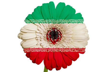 piktogramm: gerbera daisy flower in colors national flag of iran on white background as concept and symbol of love, beauty, innocence, and positive emotions