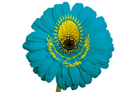 piktogramm: gerbera daisy flower in colors national flag of kazakhstan on white background as concept and symbol of love, beauty, innocence, and positive emotions Stock Photo
