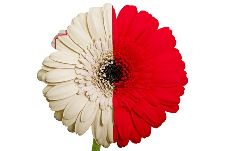 piktogramm: gerbera daisy flower in colors national flag of malta on white background as concept and symbol of love, beauty, innocence, and positive emotions Stock Photo