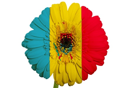 piktogramm: gerbera daisy flower in colors national flag of moldova on white background as concept and symbol of love, beauty, innocence, and positive emotions Stock Photo