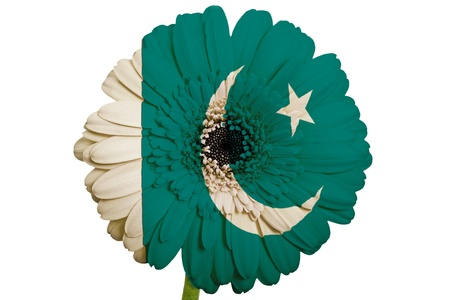 piktogramm: gerbera daisy flower in colors national flag of pakistan on white background as concept and symbol of love, beauty, innocence, and positive emotions