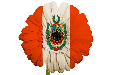 piktogramm: gerbera daisy flower in colors national flag of peru on white background as concept and symbol of love, beauty, innocence, and positive emotions
