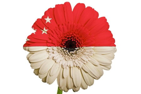 piktogramm: gerbera daisy flower in colors national flag of singapore on white background as concept and symbol of love, beauty, innocence, and positive emotions