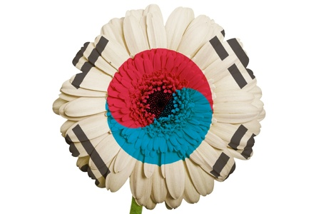 gerbera daisy flower in colors national flag of south korea on white background as concept and symbol of love, beauty, innocence, and positive emotions photo