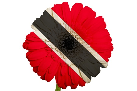 piktogramm: gerbera daisy flower in colors national flag of trinidad tobago on white background as concept and symbol of love, beauty, innocence, and positive emotions Stock Photo