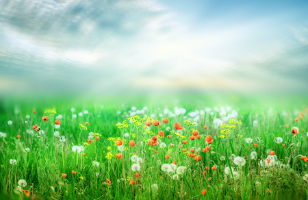 beautiful spring landscape with sun and flowers