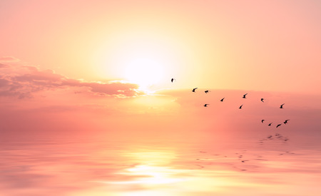beautiful sky on sunset or sunrise with flying birds to the sun, natural background