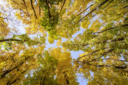 colorful trees branches in sunny forest, autumn natural  photo